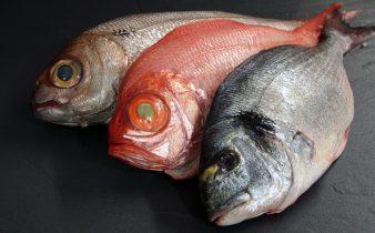 Tipos de pescados
